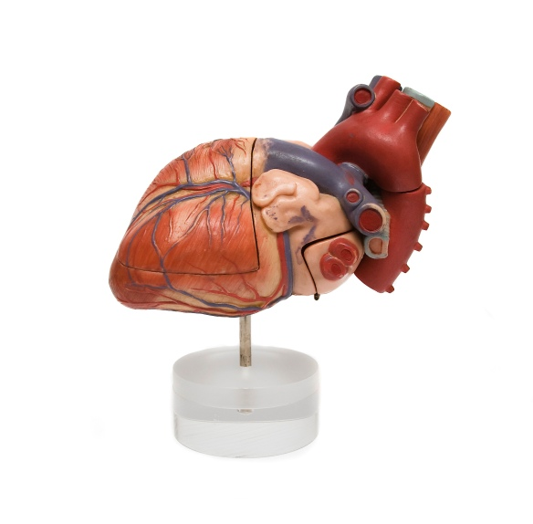 heart-1414896