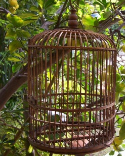 free-as-a-bird-1536761