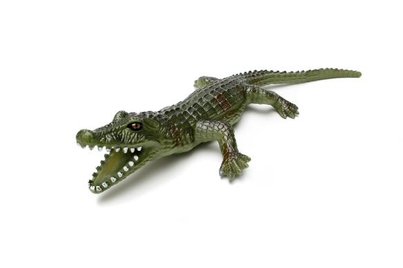 alligator-grrrrrr-1387308