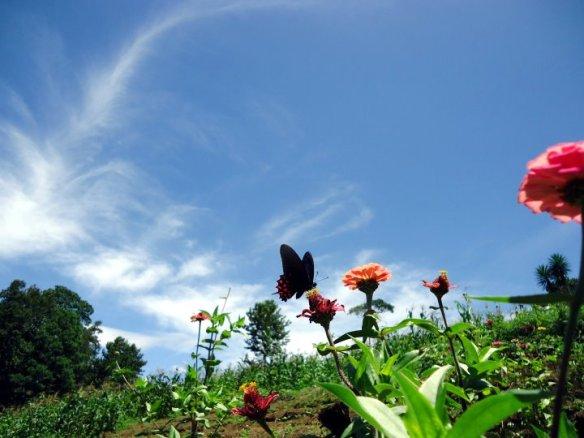 el-nectar-de-la-vida-1144016