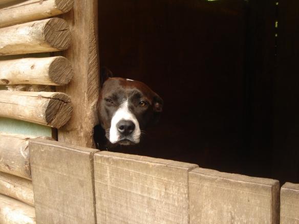 dog-thinking-1381949