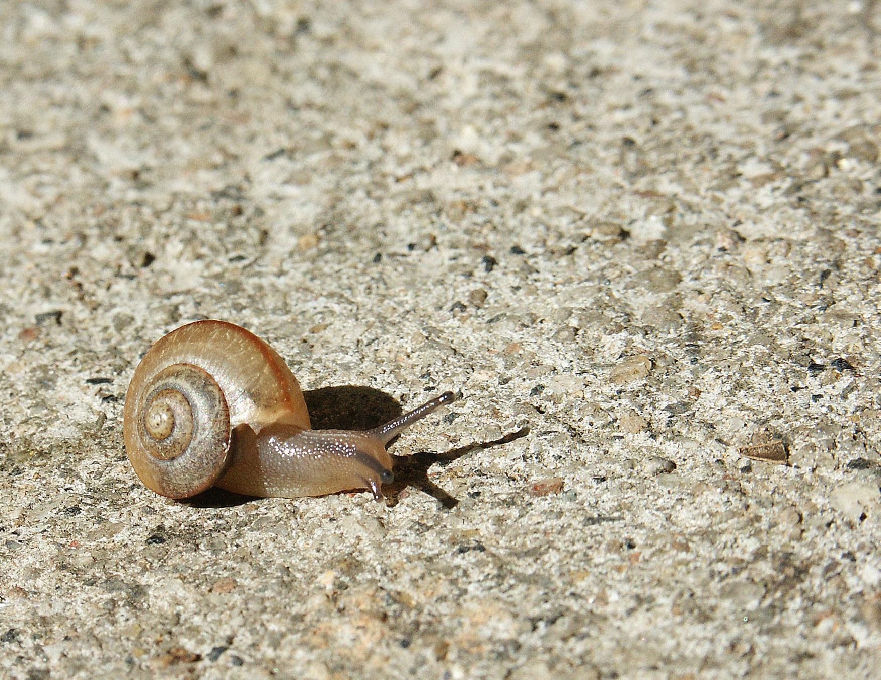 snails-1393436