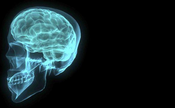 brain-001-1172516