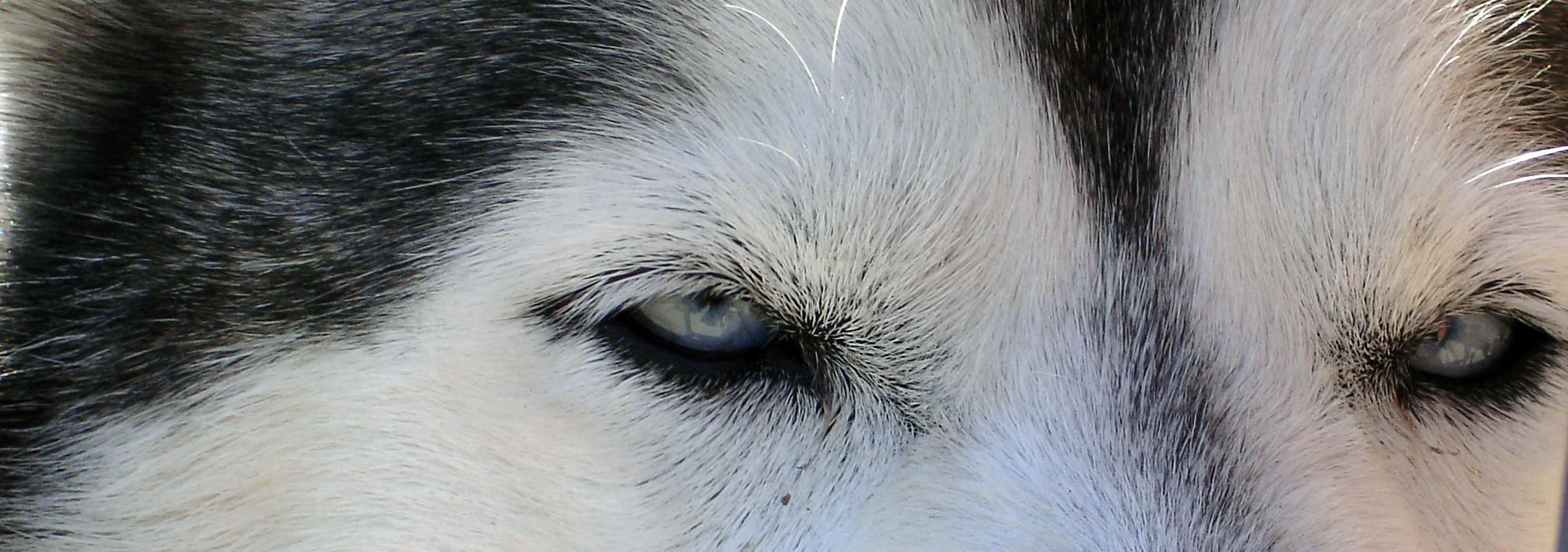 dog-1388351