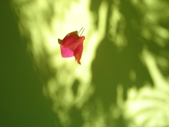 petal-1559143