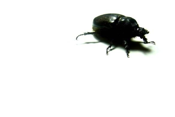 beetle-1-1393936