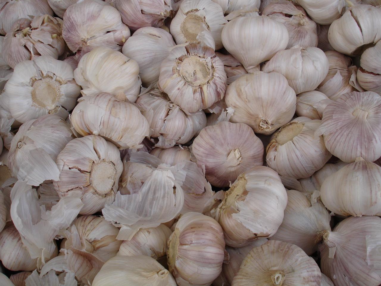 garlic-1183051